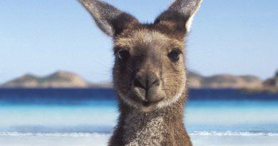 Australia: i tanti sforzi per controllare un Continente