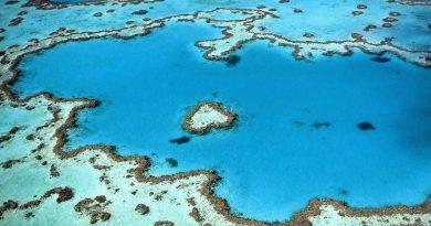 La grande barrière de corail, l'une des attractions naturelles de l'Australie