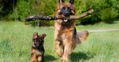 15 consigli per rendere felice il tuo cane