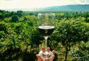L'arte delle degustazione del vino: un fantastico mondo tutto da scoprire